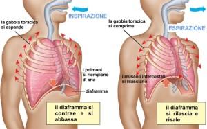 respirazione-polmoni-diaframma
